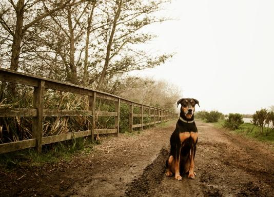 170209_Fog dog-1