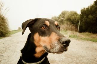 170209_Fog Dog-2