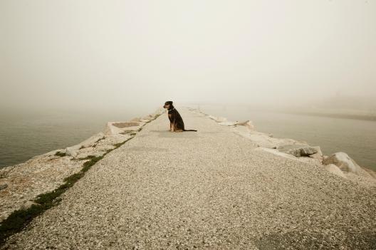 170209_Fog Dog-3