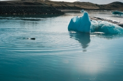 Jokulsarlon and Fjallsarlon-18