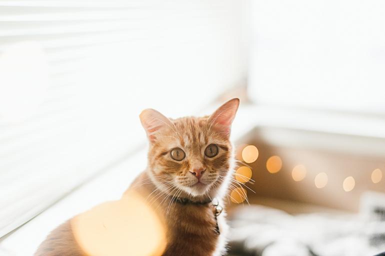 180323_Kitty-1