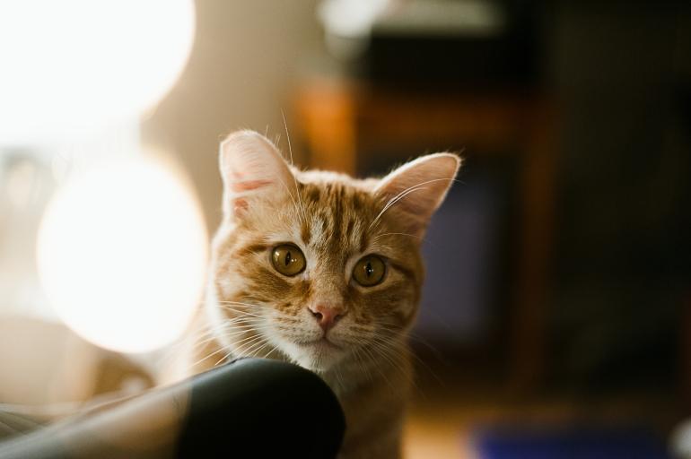 180323_Kitty-2