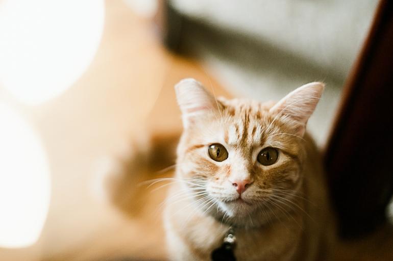 180323_Kitty-3