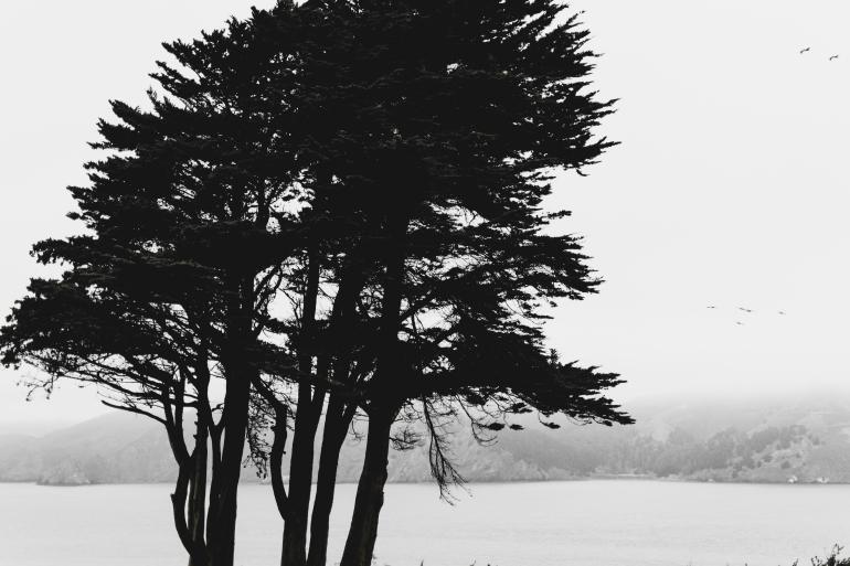 180906_San Francisco-13
